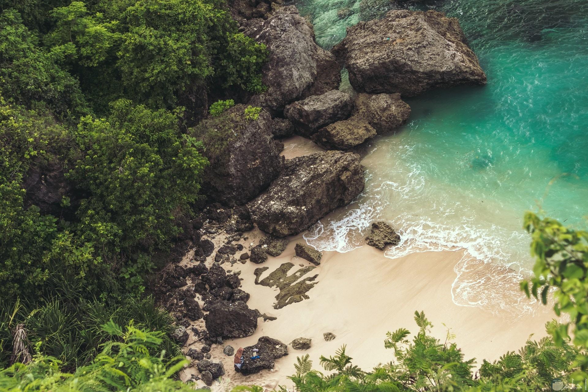 صورة طبيعة مميزة للبحر والصخور والغابة كخلفية جميلة لهاتفك
