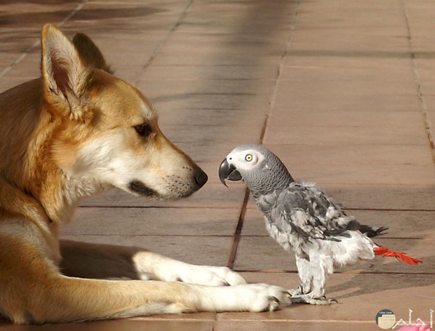 صورة غريبة تجمع كلب مع عصفور صغير