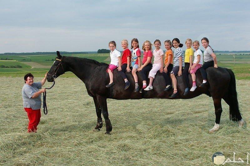 صور غريبة لحصان طويل وغريب يحمل مجموعة من الاطفال