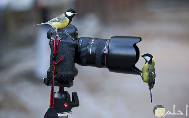 صورة غريبة لعصفورتين مع كاميرا المصور