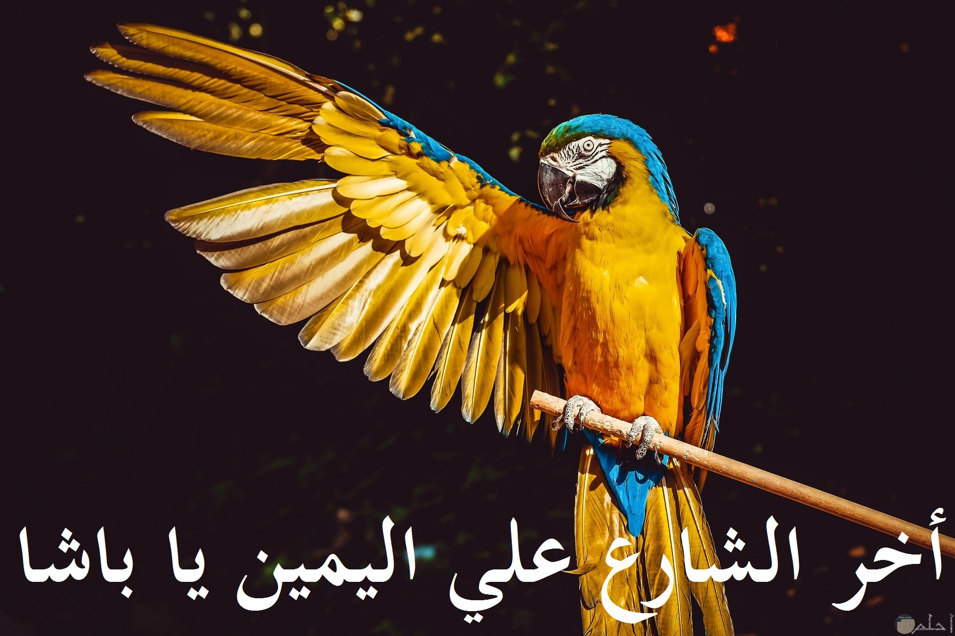 صورة كوميدية لطائر مضحك يقوم بالإشارة لمكان ما مضحكة جدا