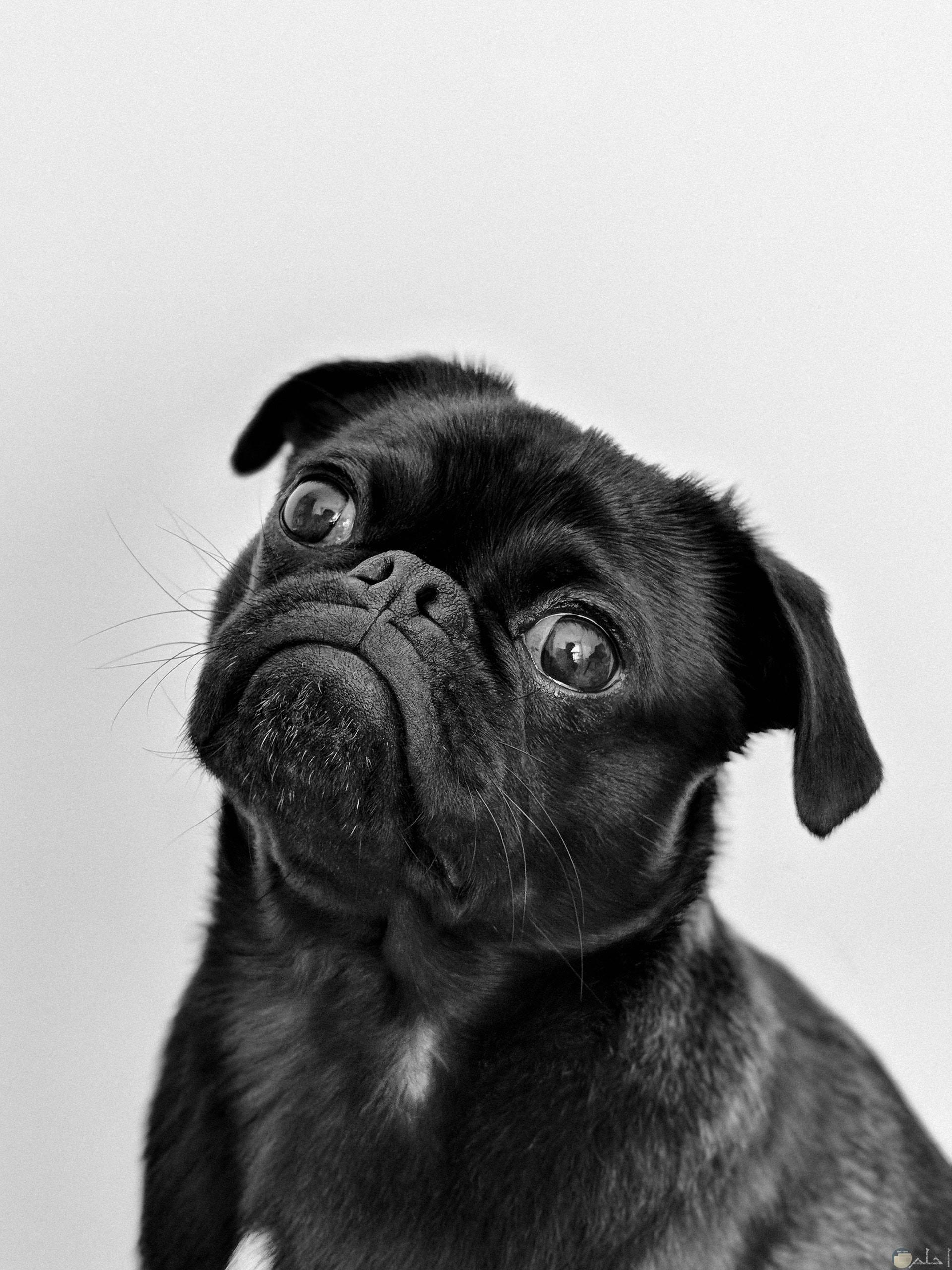 صورة كوميدية لكلب مع تعابير وجة مضحكة جدا