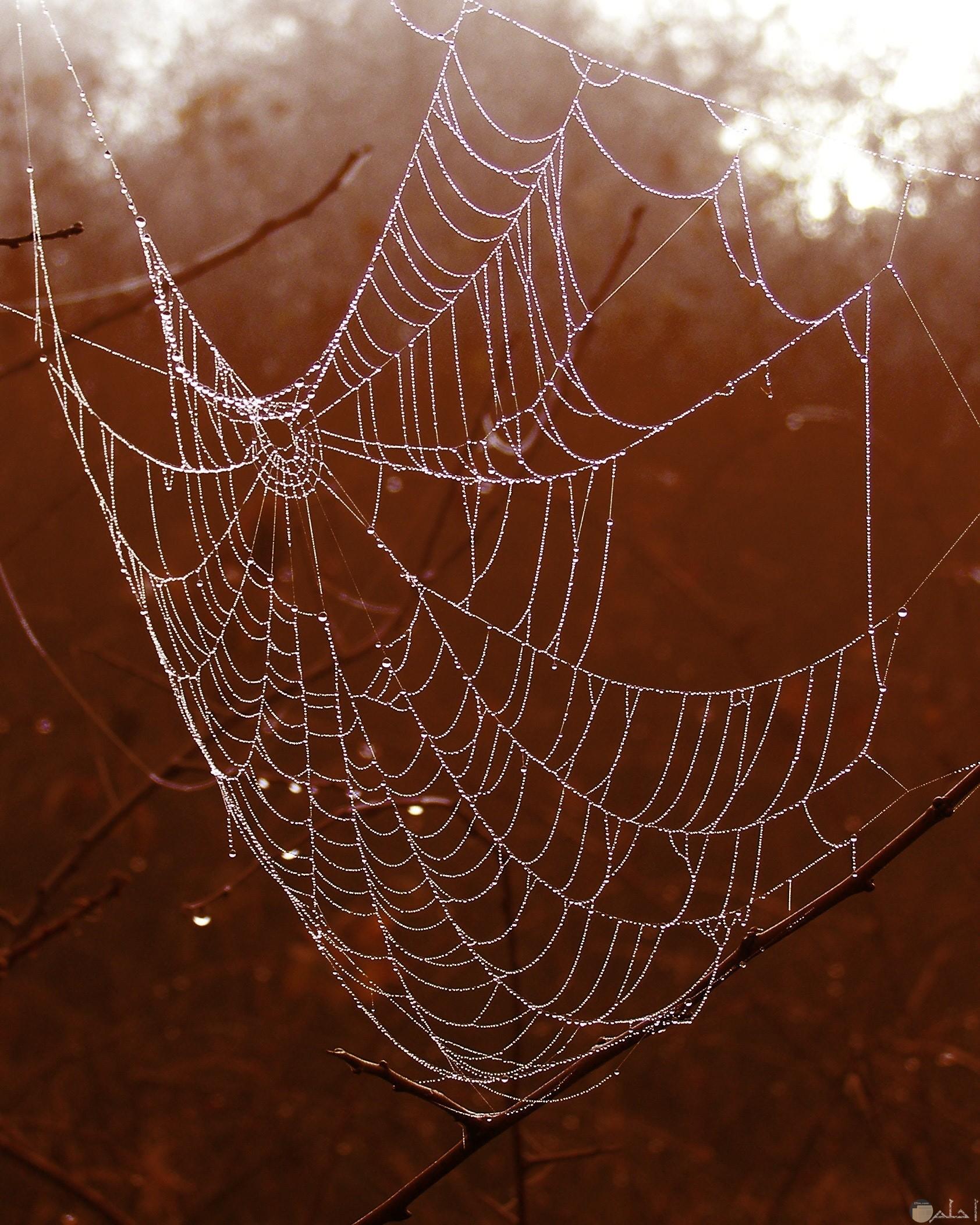 صورة مرعبة مميزة لشبكة عنكبوت مخيفة في الغابة