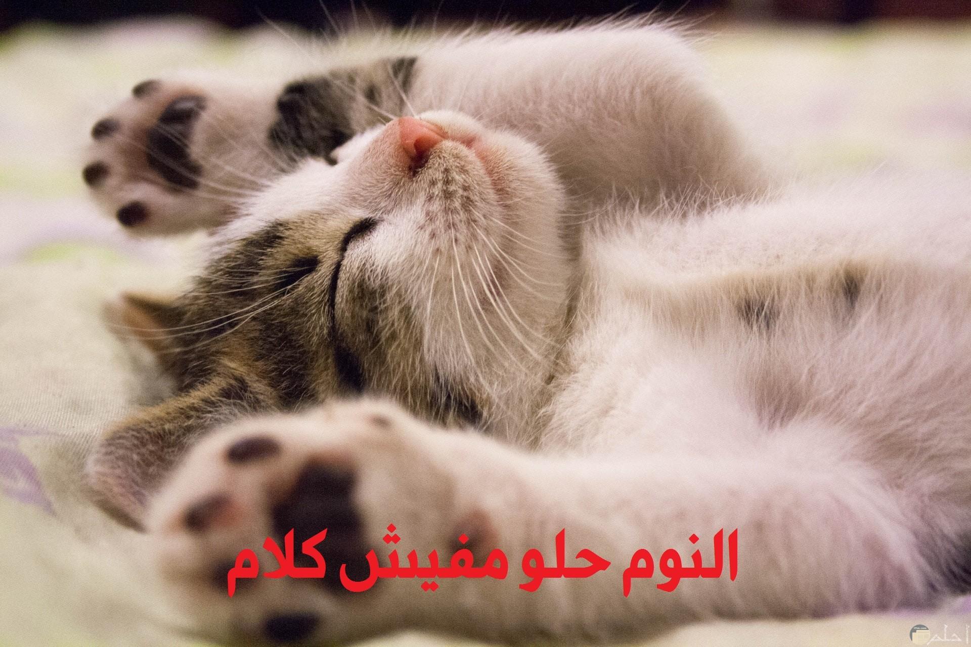 صورة مضحكة لبسه نائمة مكتوب عليها النوم حلو مفيش كلام