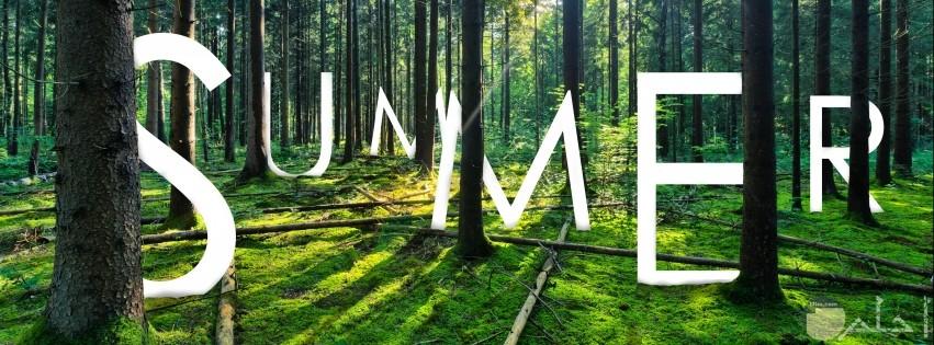 صورة حروف كلمة summer داخل الغابة