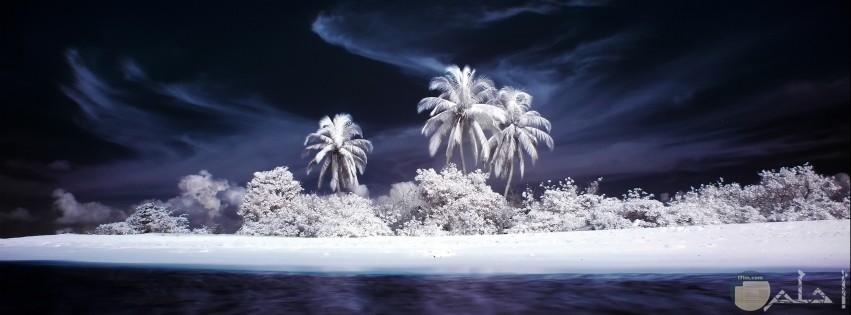 صور نخيل واشجار مذهلة