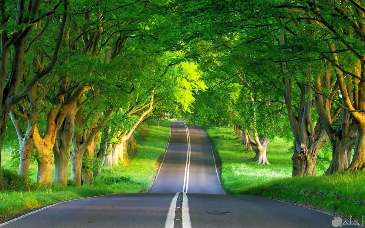 طريق الأشجار خلفية تجنن
