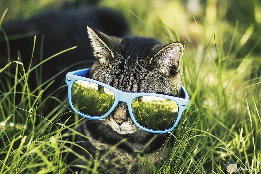 صورة لقطة صغيرة ترتدي نظارة