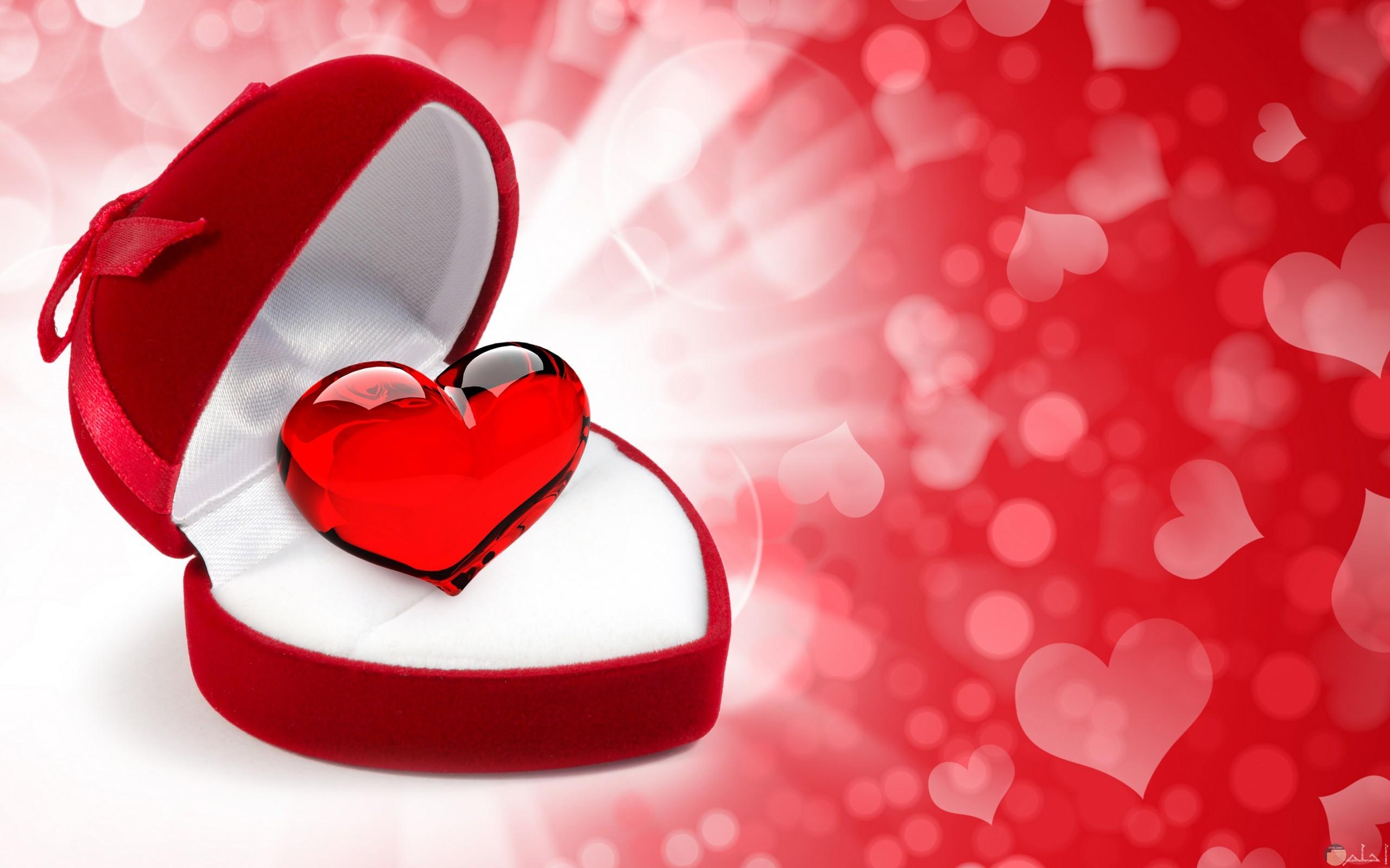 قلب أحمر لامع للتصميم