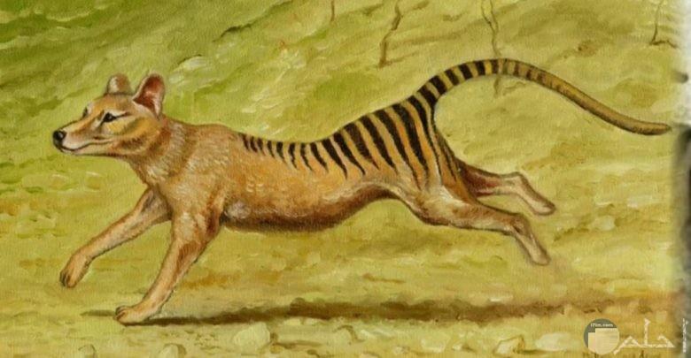 10 صور حيوانات منقرضة وحيوانات مهددة بالإنقراض