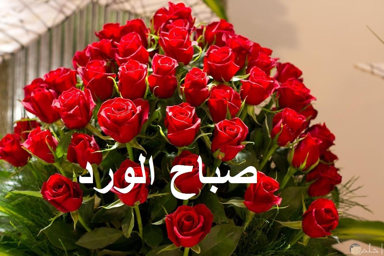 صورة صباح الورد مع الورد الأحمر