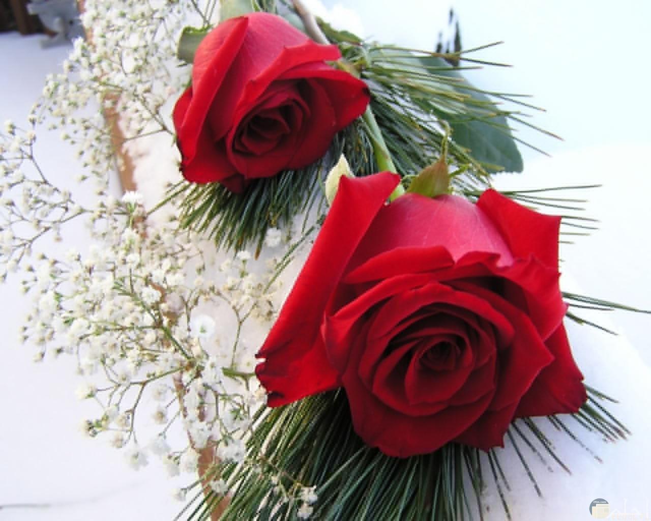ورد أحمر رمز المحبة