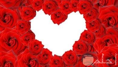 ورد أحمر قلب
