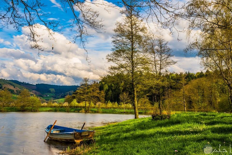 صورة لمركب صغير على شاطئ نهر محاط بالنباتات والاشجار