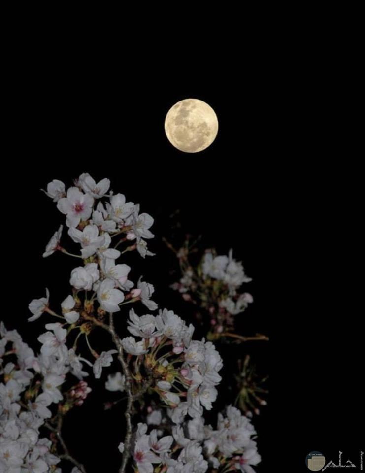 صور لجمال القمر أسود وأبيض مع الزهور