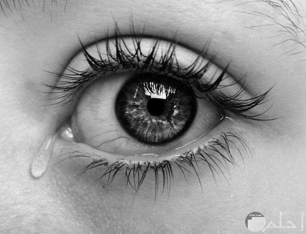 دمعة حزينة2