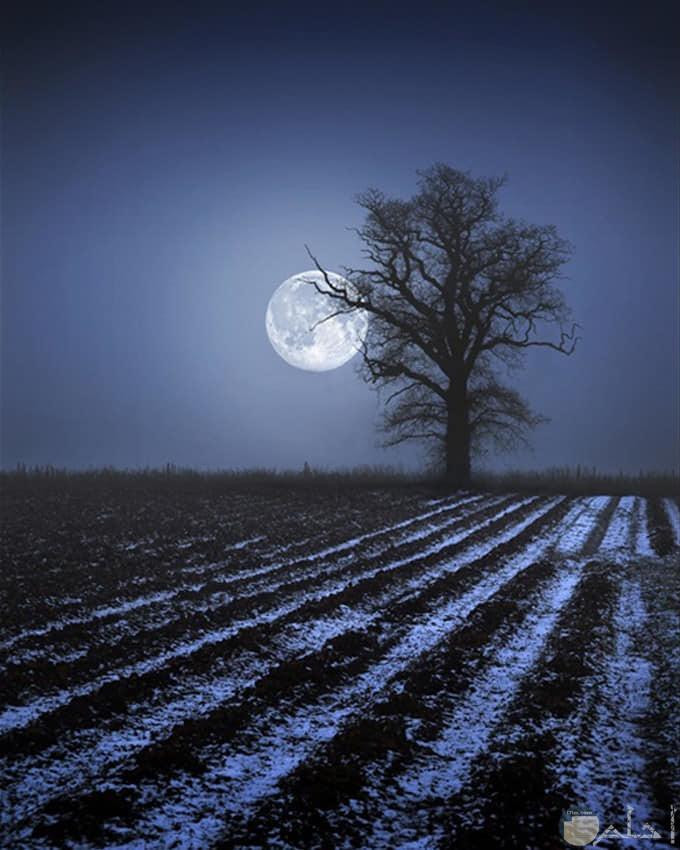 صور روعة لجمال القمر بالليل