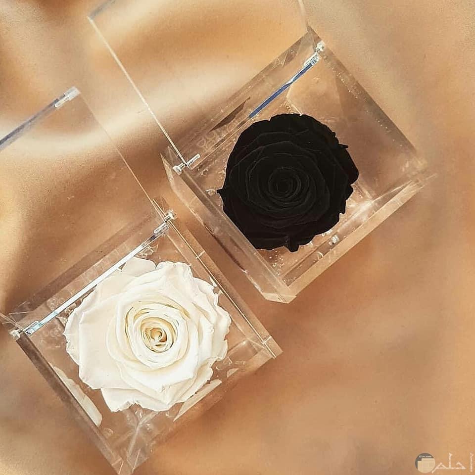صورة لوردتين بالون الأسود والأبيض