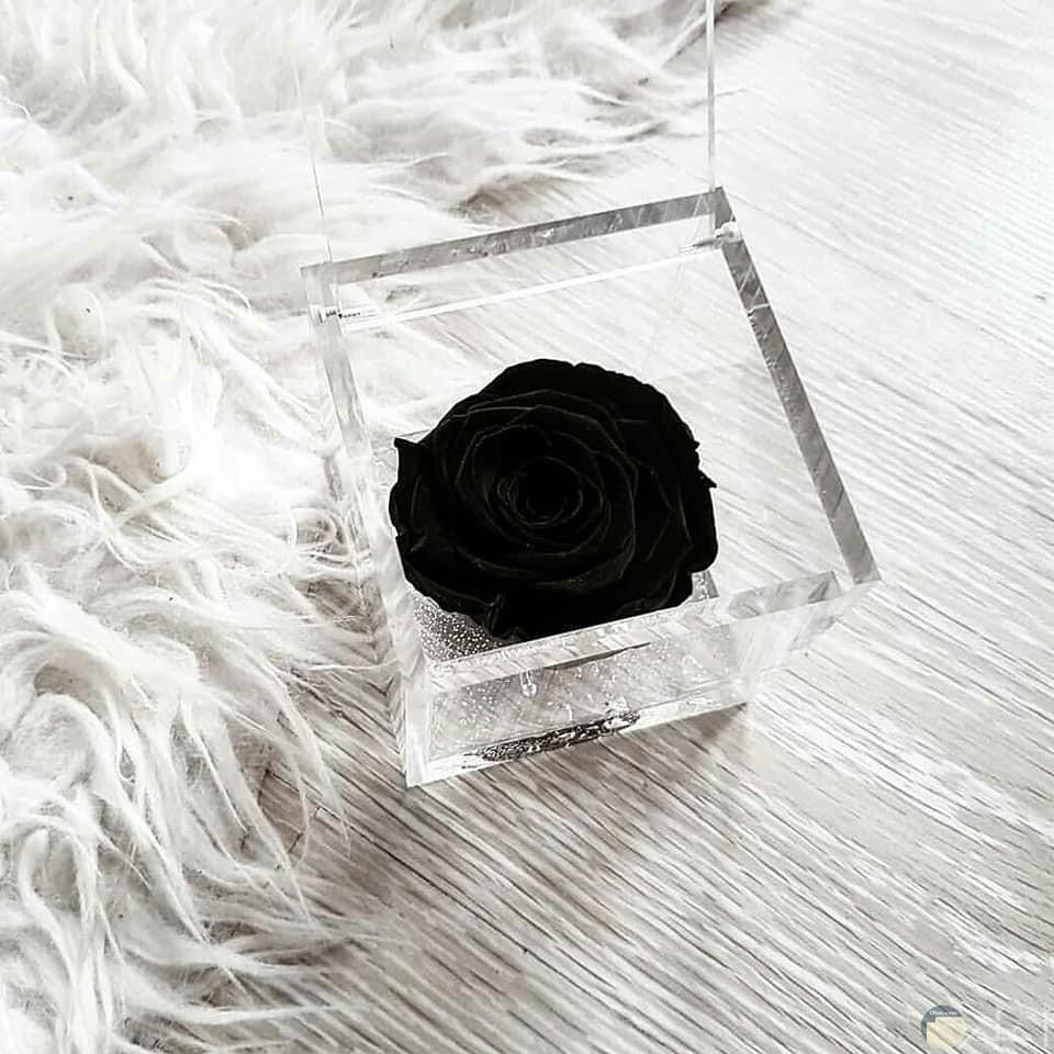 صورة وردة مميزة سوداء تجنن بصندوق