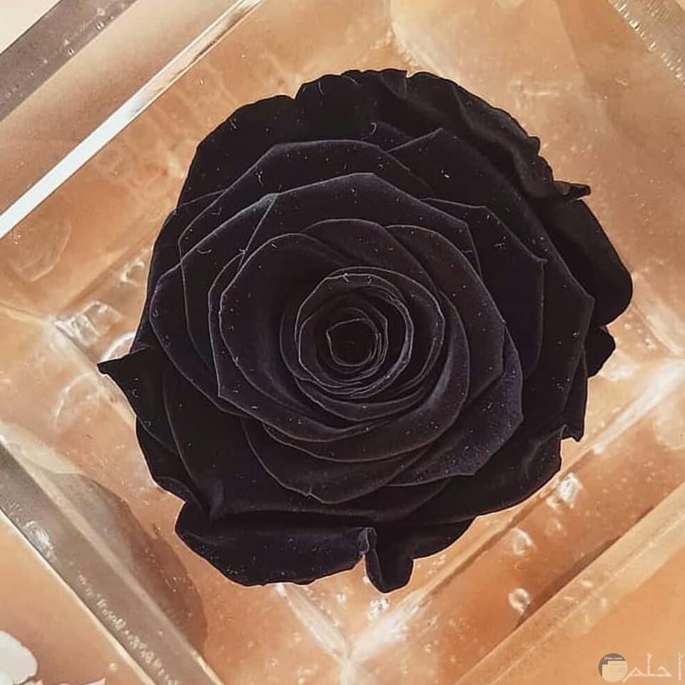 صورة وردة مميزة سوداء تجنن