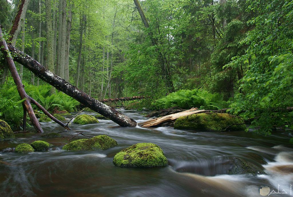 صورة لنهر رائع محاط بالاشجار الخضراء الرائعة