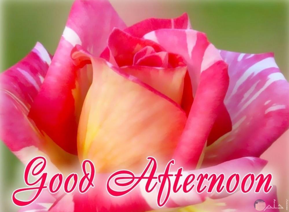 Good-Afternoonصورة