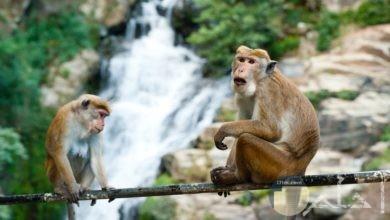 اجمل صور حيوانات