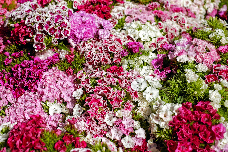 صور مجوععة من الورود البنفسجي