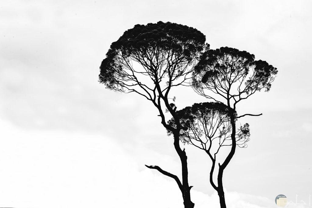 صور ثيمات للأشجار
