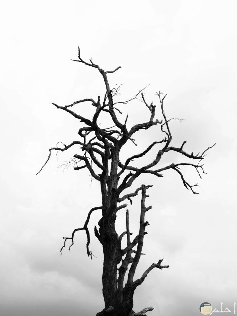 صورة شجره بدون اوراق