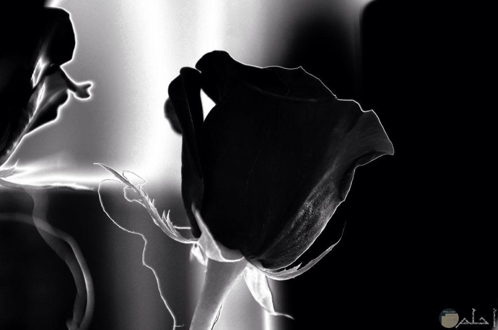 وردة مميزة بالون الأسود