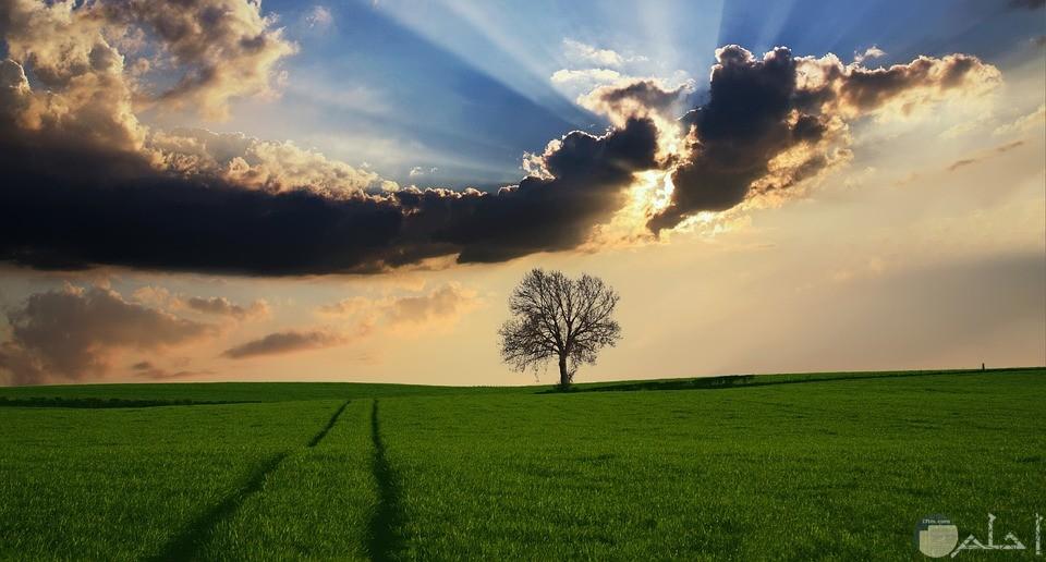 صورة لارض زراعية خضراء وشجرة وسماء تغمرها سحاب
