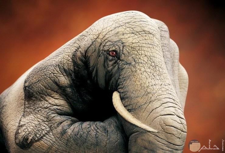 رسم فيل غريب