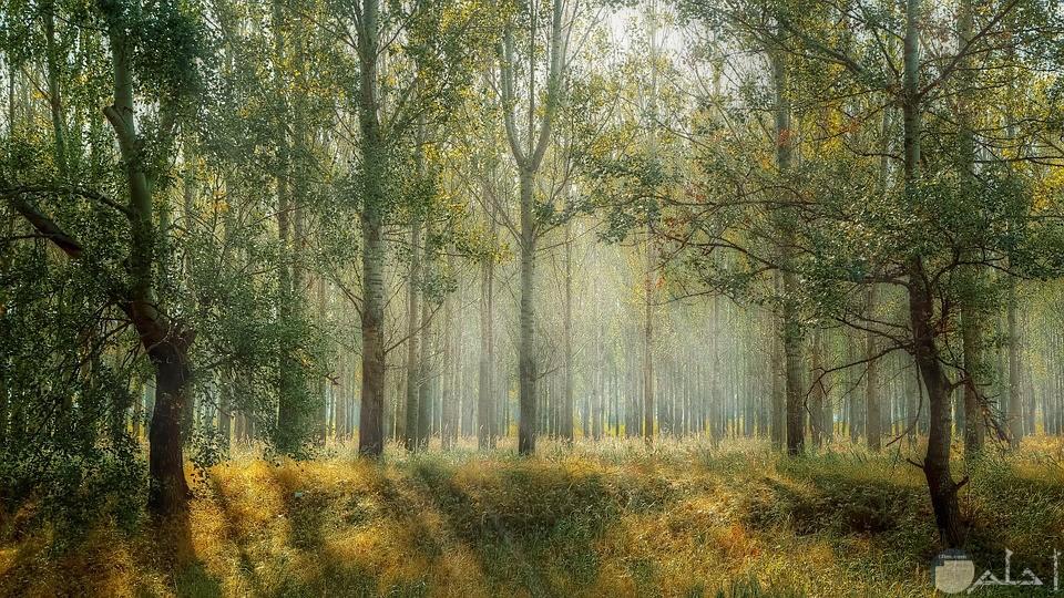 صورة تعبيرية لمجموعه من الاشجار الخضراء