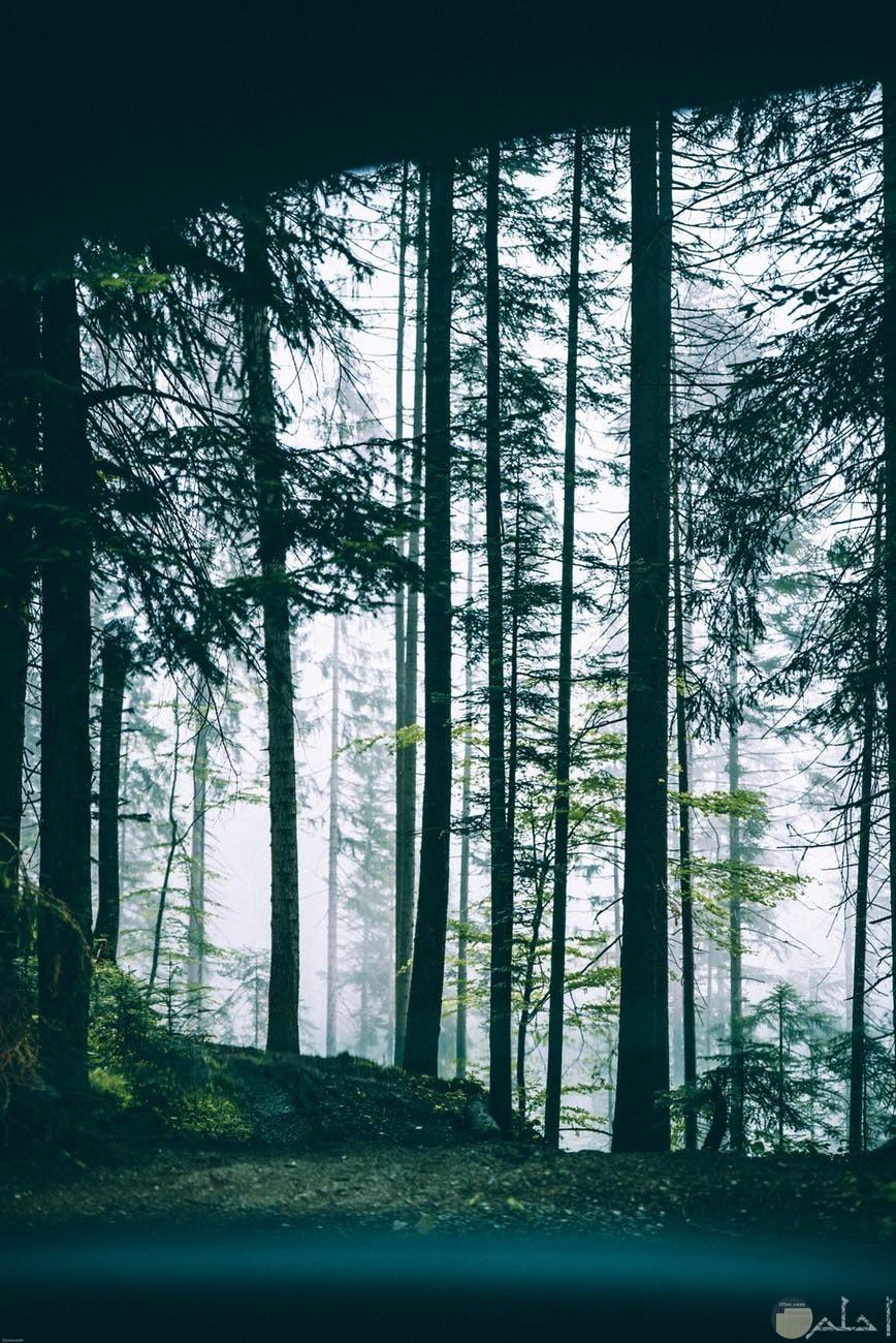 صوره نخل كثير وارض خضراء في الغابه