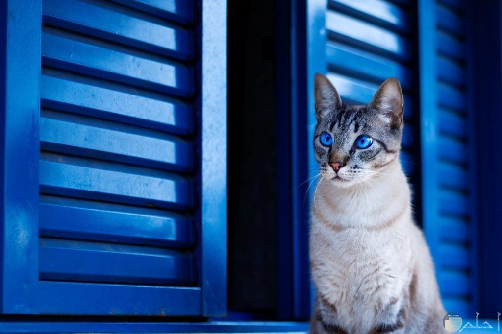 صوره قطه علي شباك ازرق