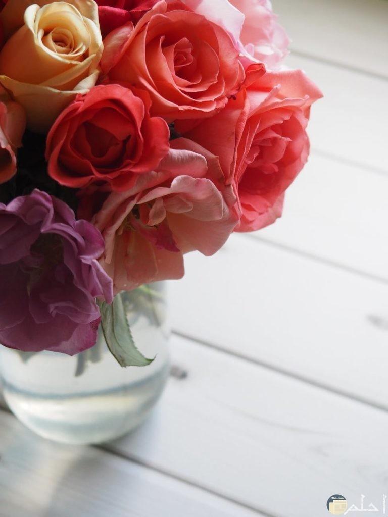 اجمل وروود من درجات اللون البنفسجي