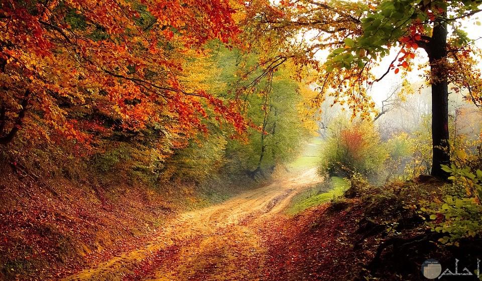 صورة تعبيرية مميزة لاشجار ملونة