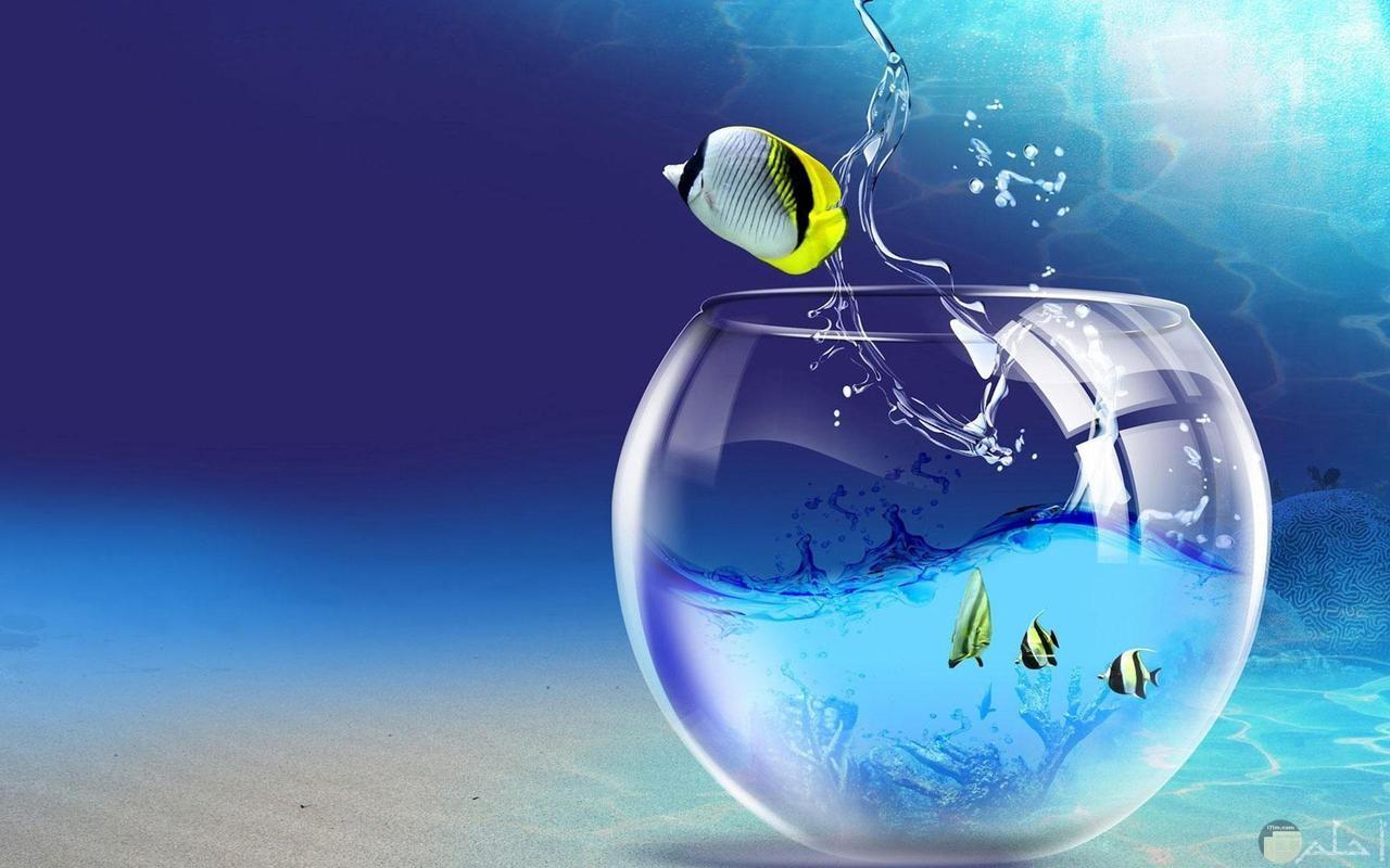خلفية حوض سمك