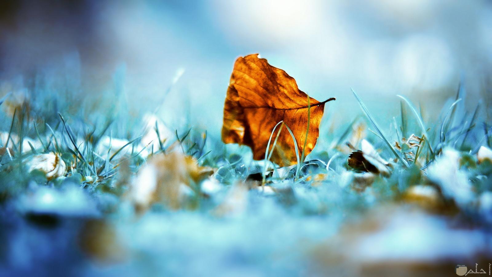صور خلفيات من جمال الطبيعة