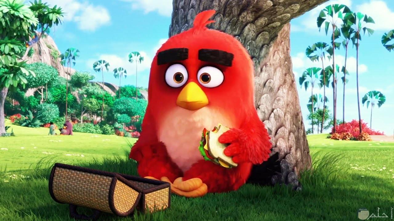 صورة الطيور الغاضبة