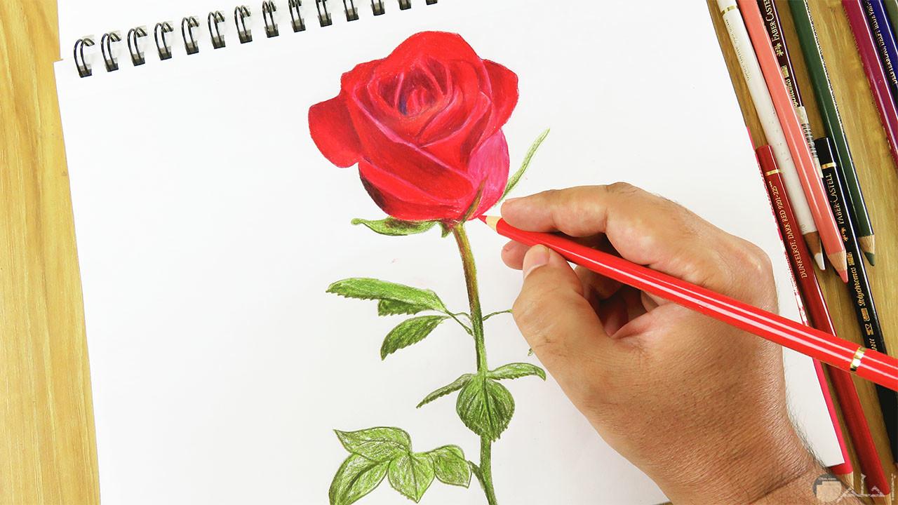 وردة حمراء جميلة مرسومة وملونة بشكل مبدع