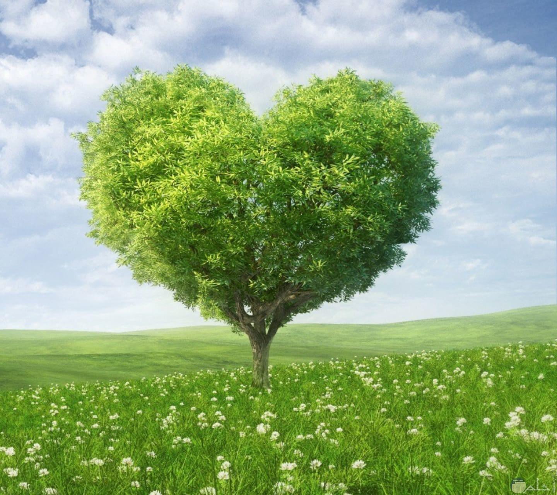 قلب أخضر من الطبيعة