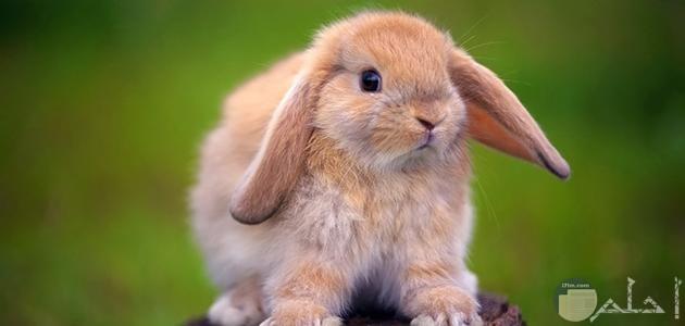 صور حيوانات أرانب كيوت
