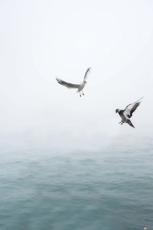 صورة جميلة جدا لطائران يطيران في الهواء فوق البحر