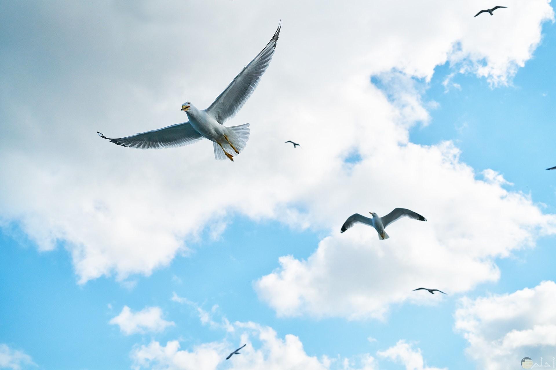 صورة جميلة جدا لمجموعة من الطيور تطير في الهواء