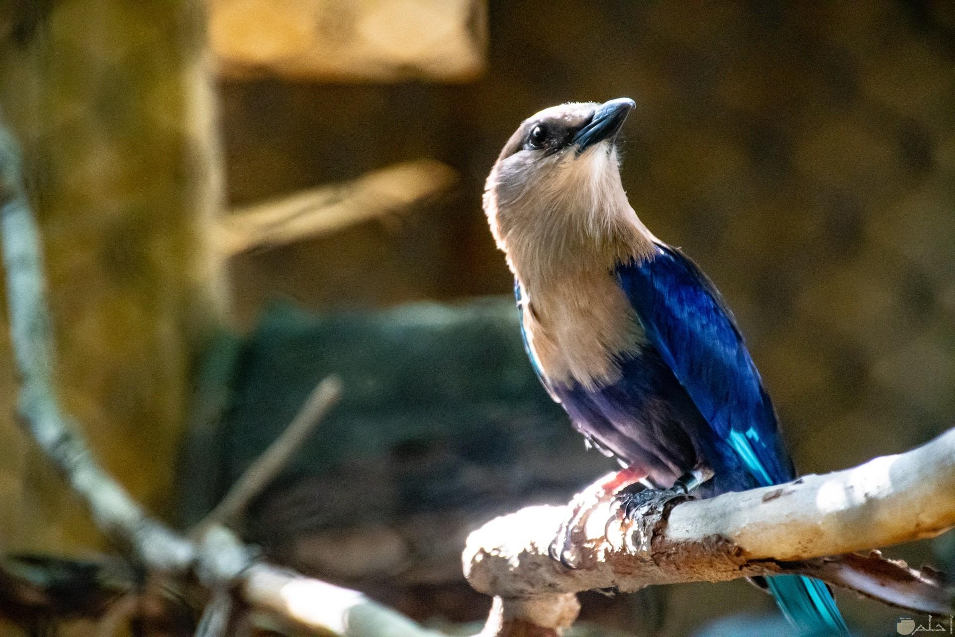 صورة جميلة لطائر ملون باللون الأبيض والأزرق واقف علي غصن الشجرة