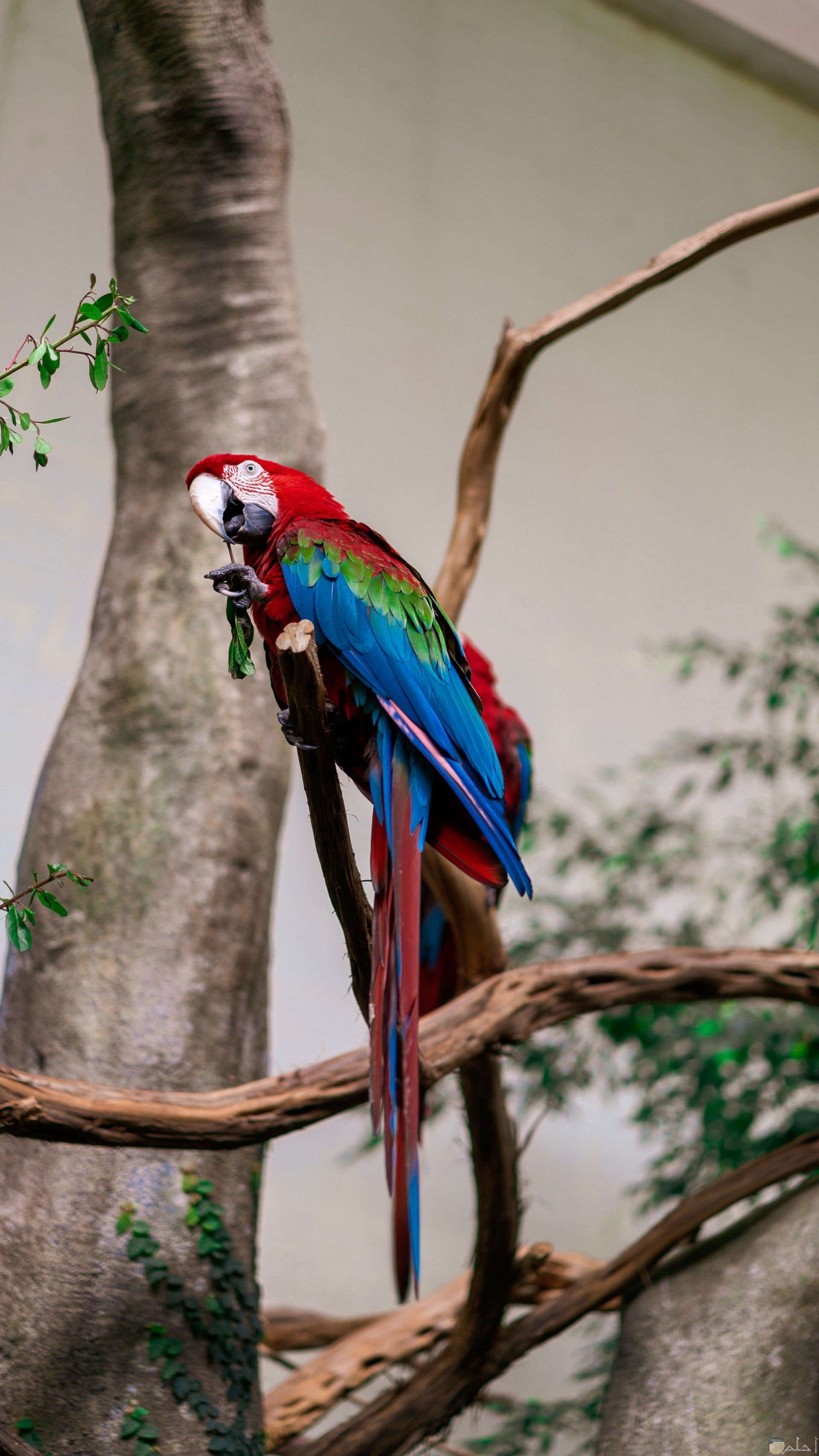 صورة جميلة لطائر ملون باللون الأخضر والأزرق والأحمر واقف علي غصن شجرة