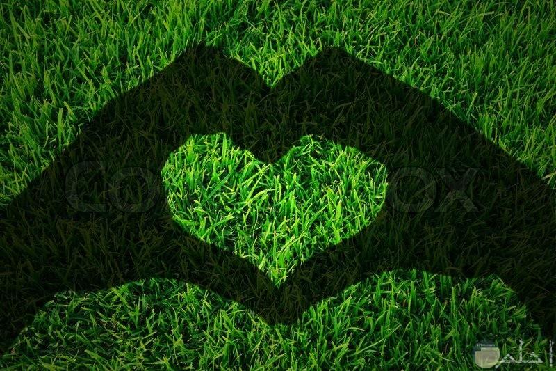 قلب اخضر رومانسي
