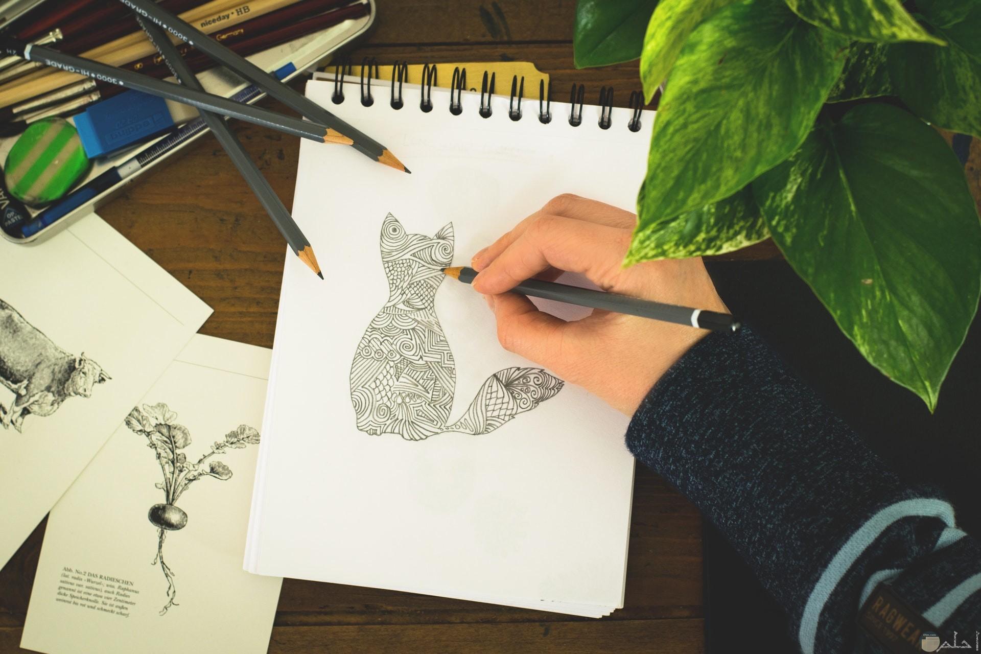 صورة رسمة قطة بالقلم الرصاص في الدفتر